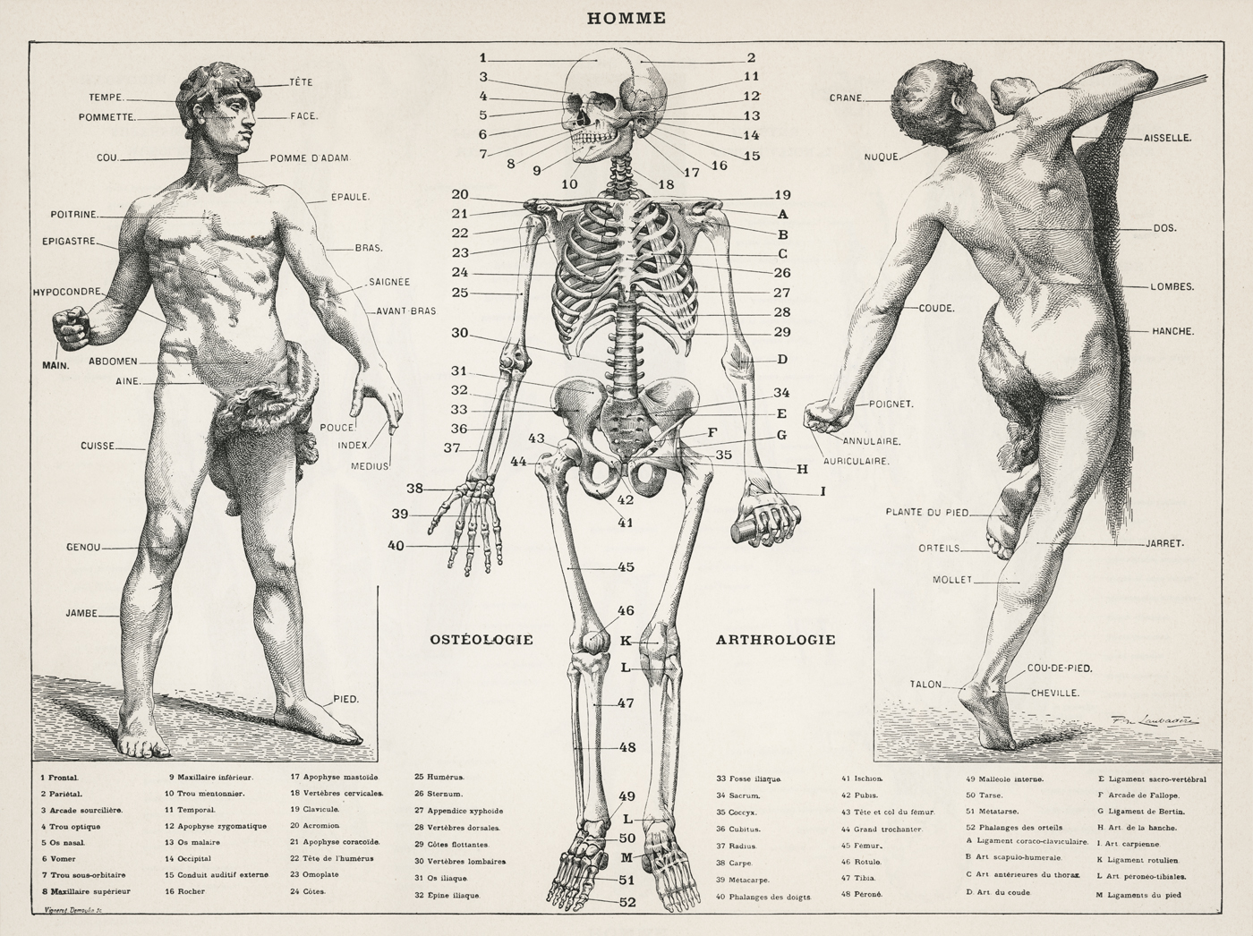 human_body_(1900)_ by_Laroussehuman_body_(1900)_ by_Larousse